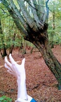 czy-to-drzewo