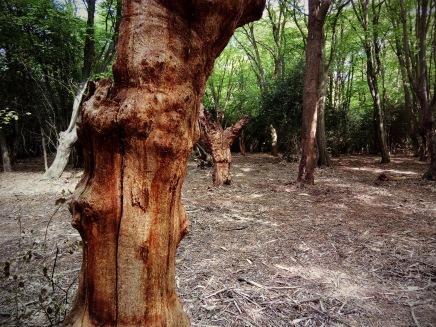 drzewa czy stwory