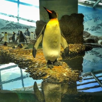 Zoo Zurich pingwin