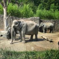 Zoo Zurich słonie